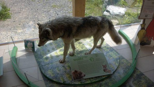 Naturparkhaus Torfhaus_Wolf